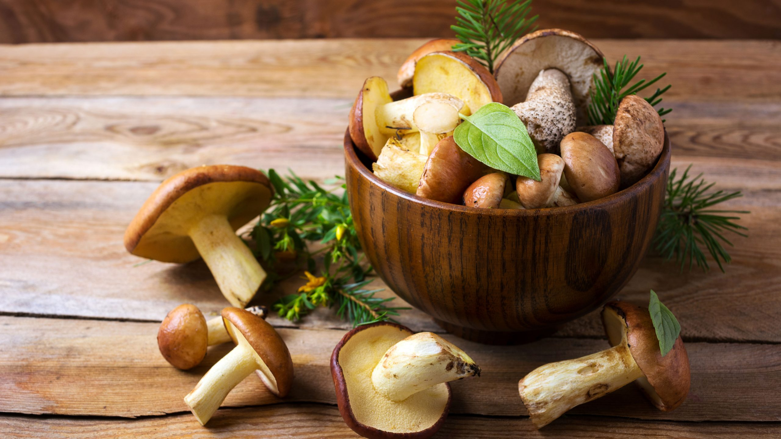 Mushrooms for Your Immune System Health